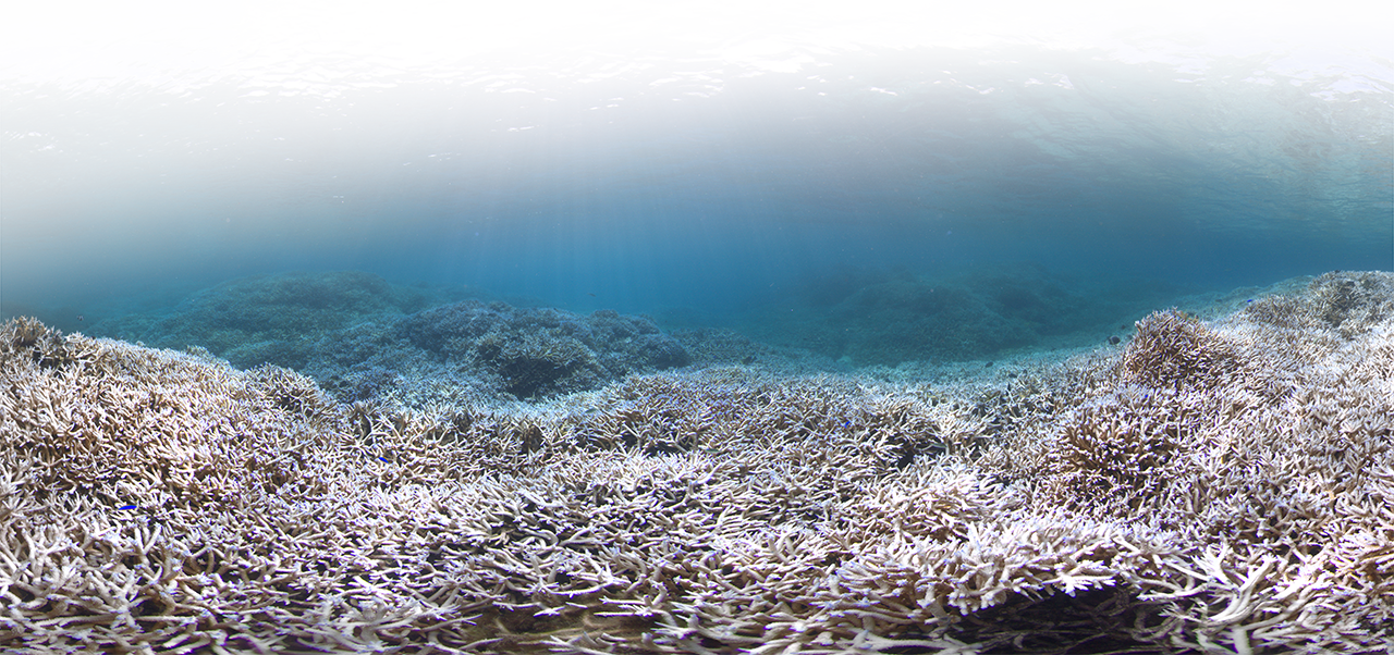 Coral Bleaching monitored by Maldives Marine Research Center (MRC)