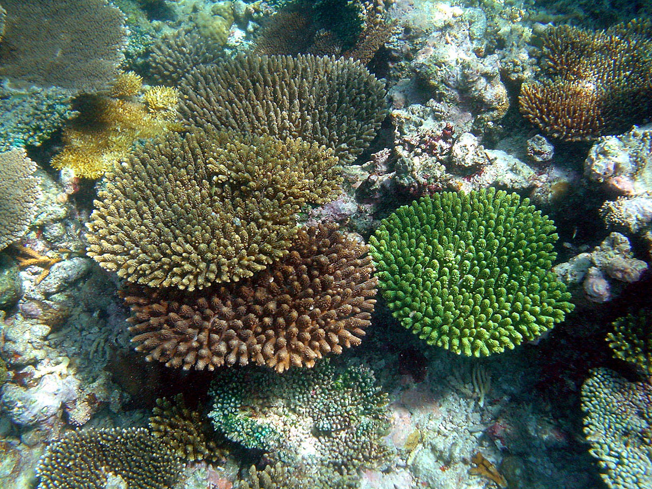 Corals from the Maldivian island of Madoogali in Maldives