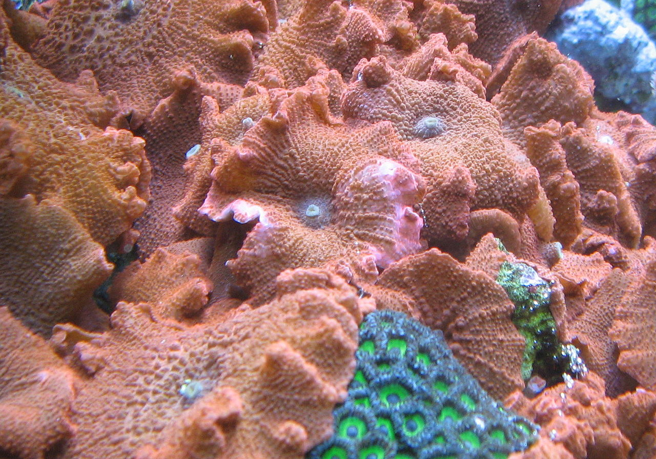 Morphological Types of Hard Corals