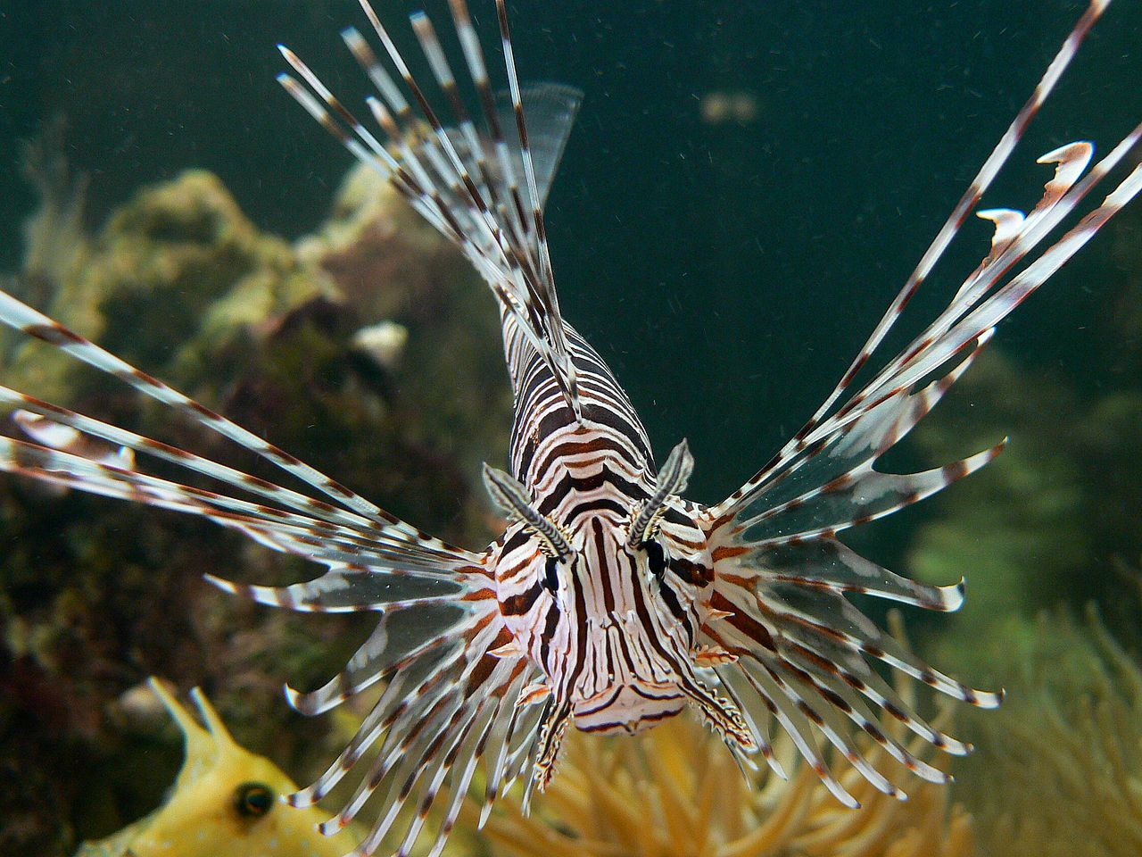 Lionfish at the Niagara Falls Aviary