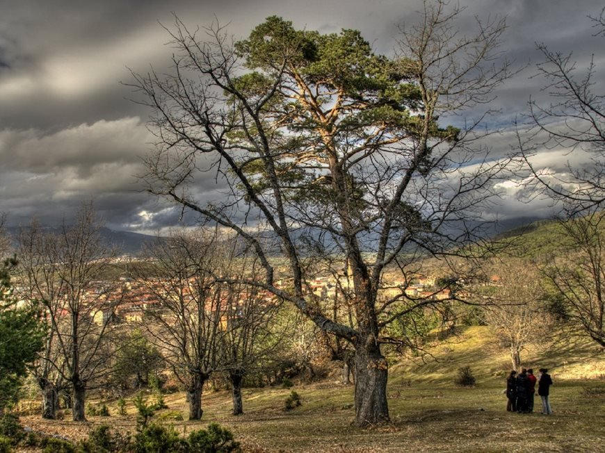 Canicosa´s Pine-Oak , Spain