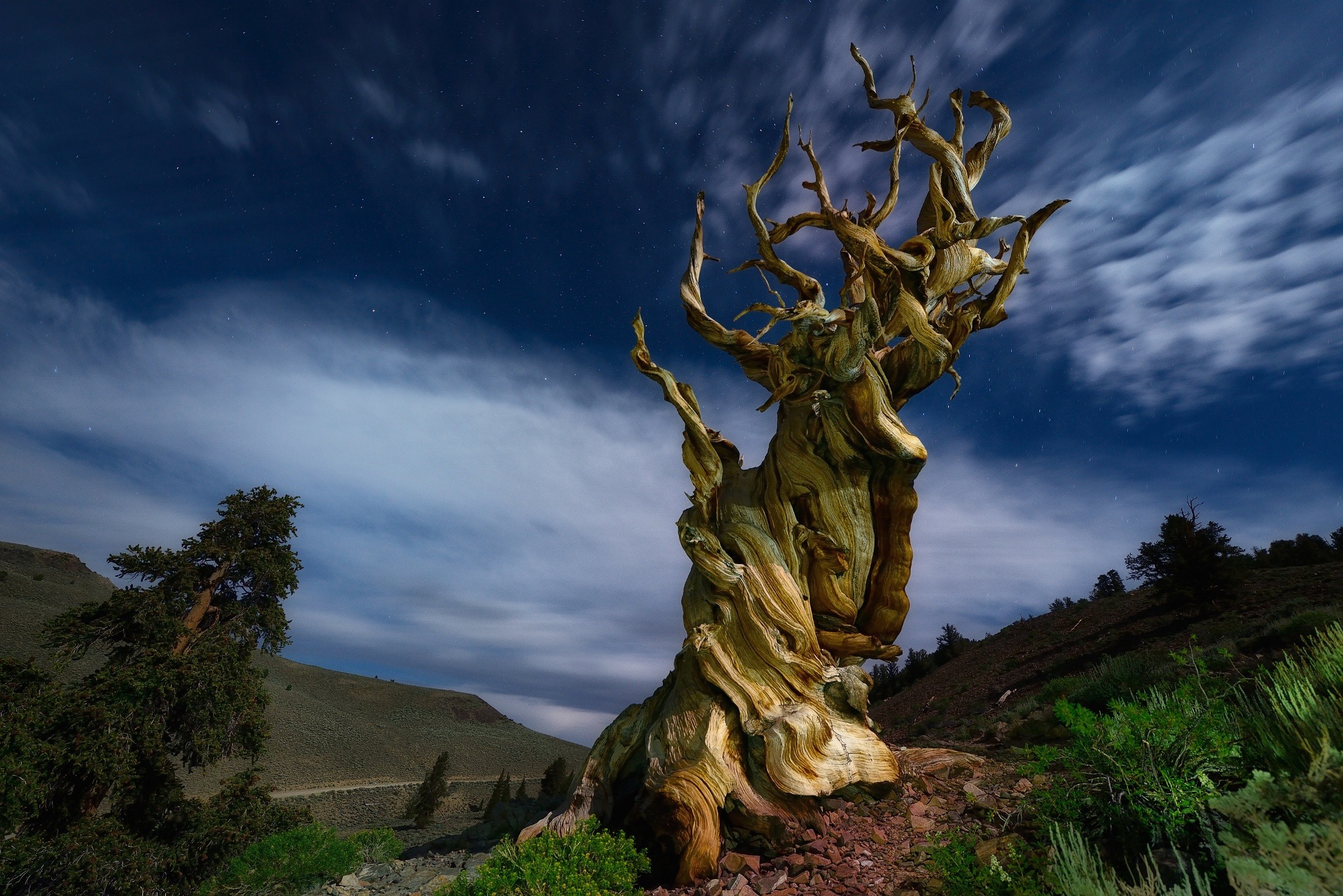 Ancient Bristlecone Pine Forest, California USA.