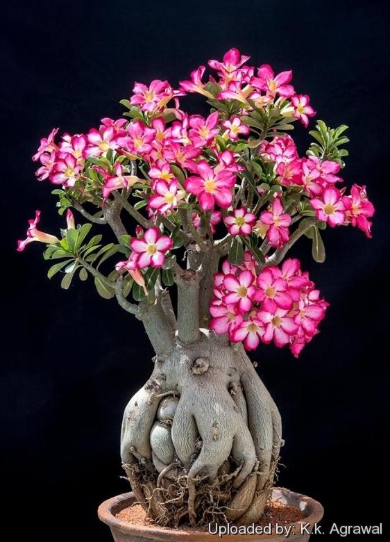 Unusual Trees
