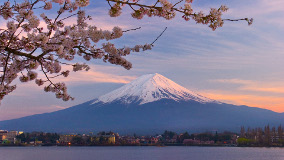 Mount Fuji cherry blossoms