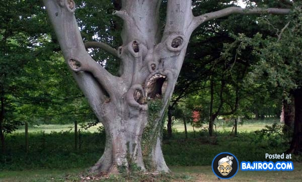 Most Funny Trees on Earth