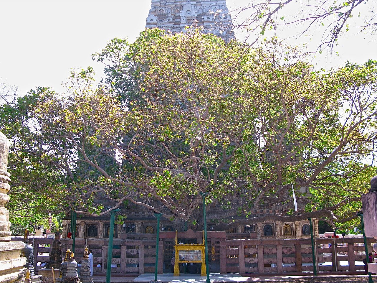The Mahabodhi Tree at the Sri Mahabodhi Temple in Bodh Gaya