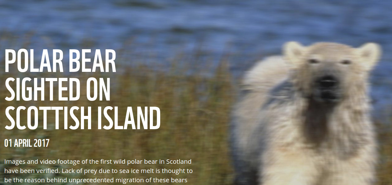 WWF: Polar bears spotted in Scotland due to sea ice melt