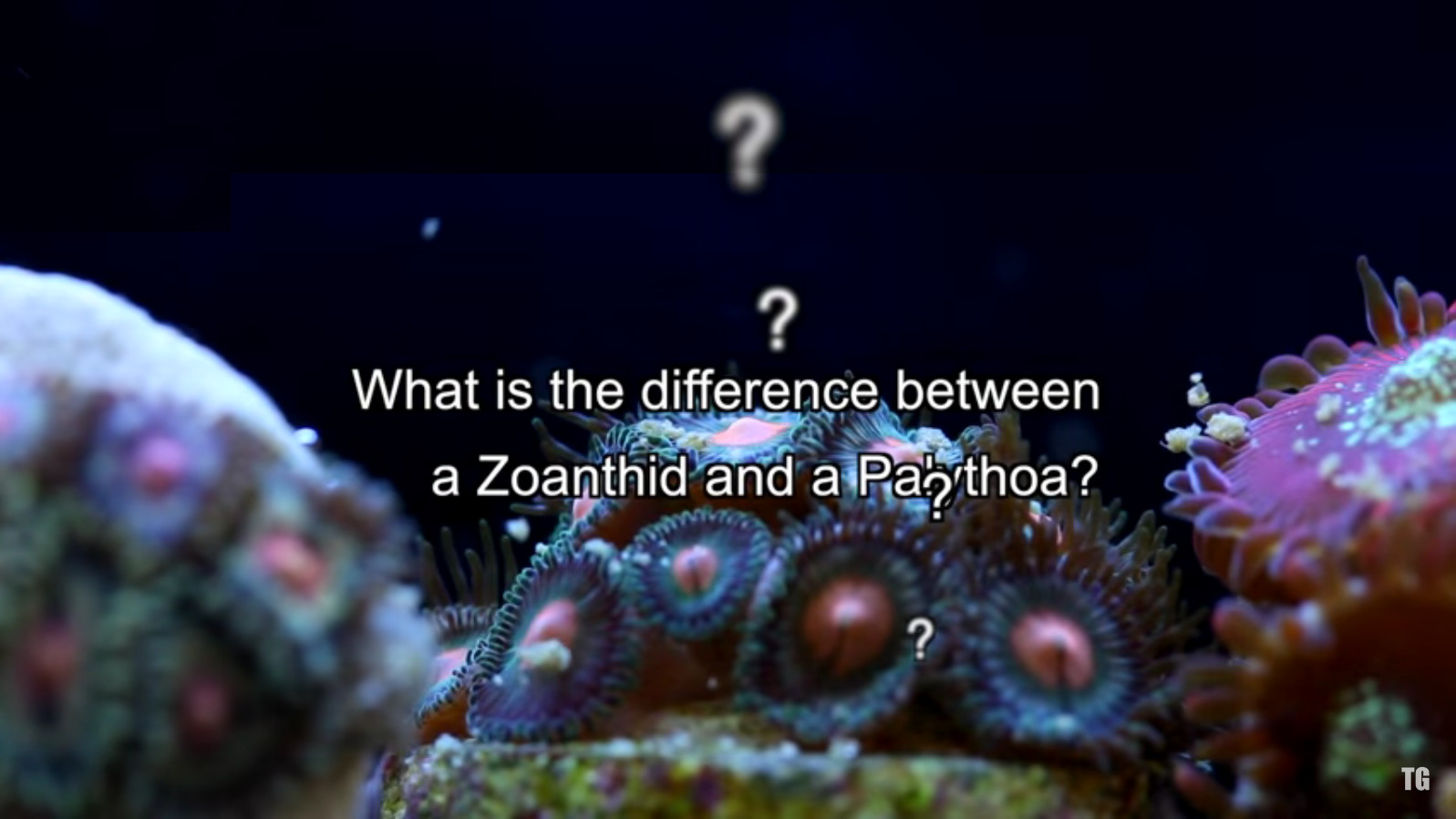 Zoanthid and Palythoa identification and taxonomy