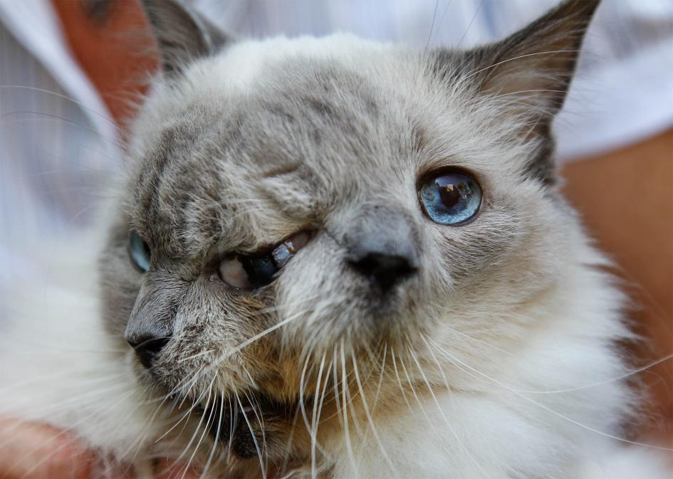 Frank and Louie, the two-faced cat
