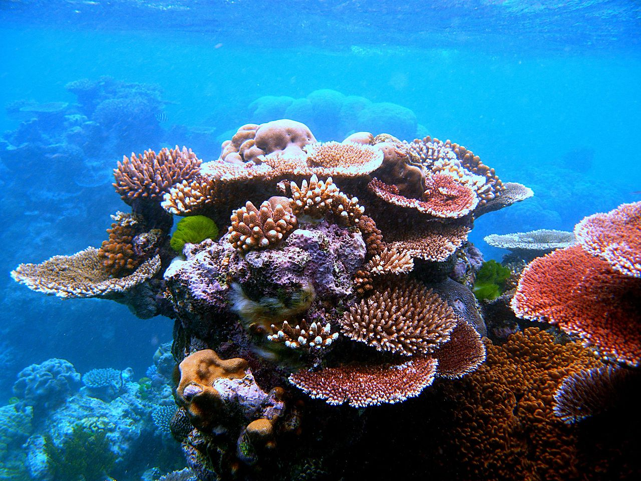 Coral reefs, a variety of corals