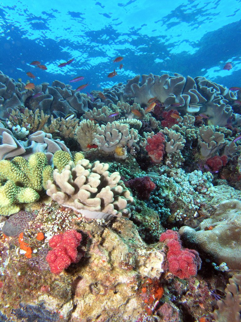 Reef scene with great diversity of coral species