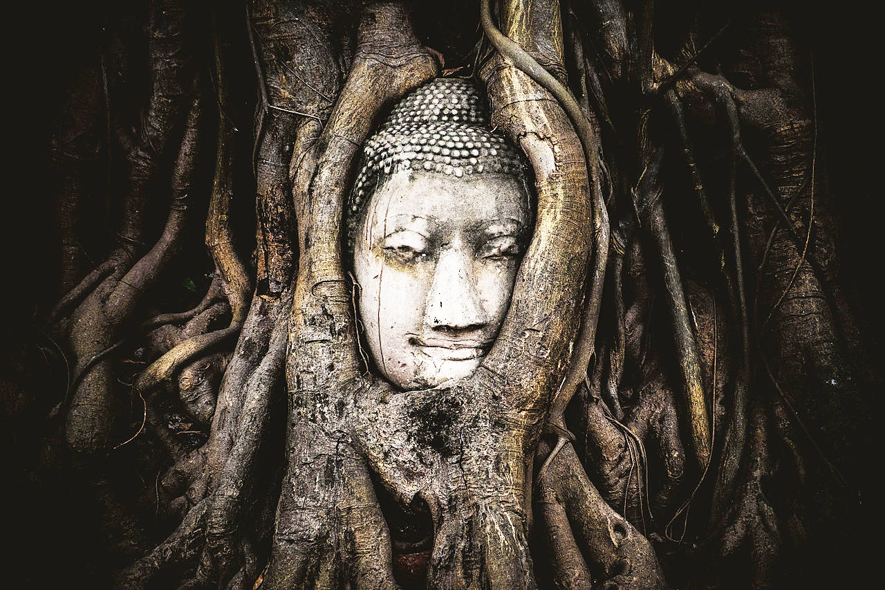 Fig tree roots overgrowing a sandstone Buddha statue