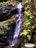 A small waterfall in the redwood forest near Fort Bragg California