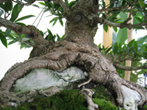 Base of the bonsai
