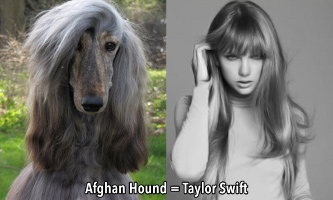 Taylor Swift & look-alike dog.