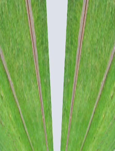 Two parallel lines are perceived to converge in the distance