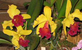 Budapest Orchid Exhibition 2006