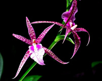 Nature's Perfections: Orchid