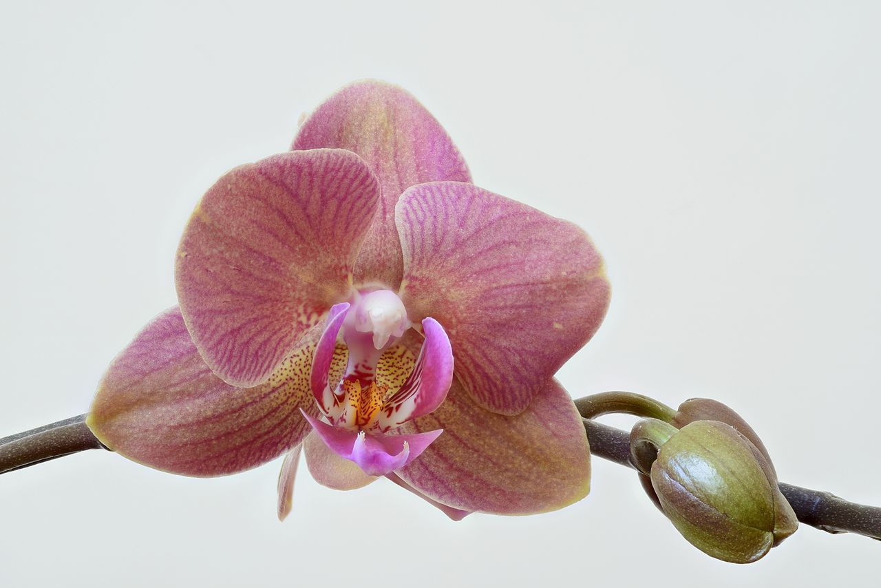 A high resolution image of an orchid