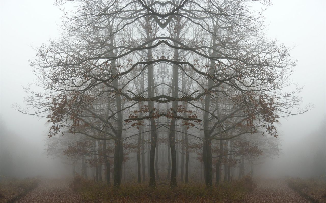 Forest (Mirror image)