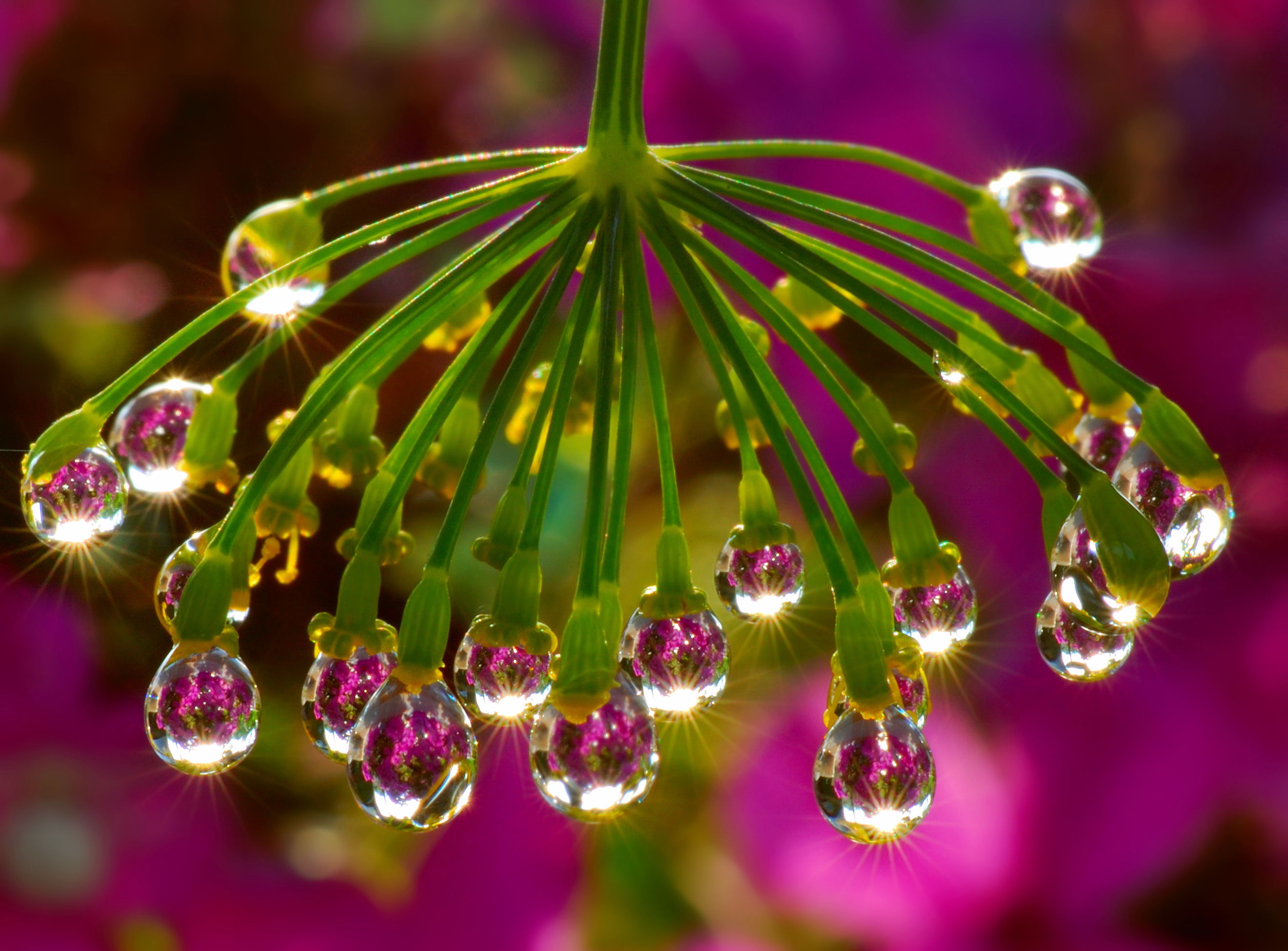 water droplet photography reflected - photo #38