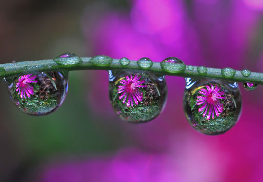 45 Stunning Examples of Water Drop Reflection Photography