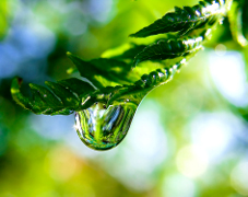 A raindrop on a fern frond
