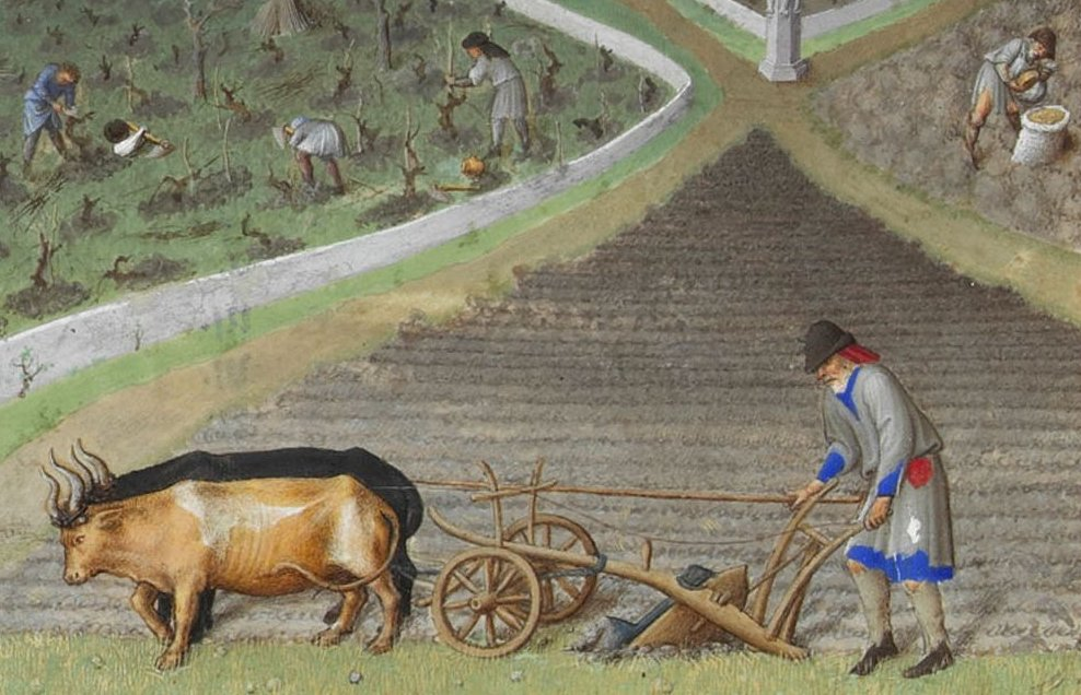 Ploughing with oxen in the 15th century