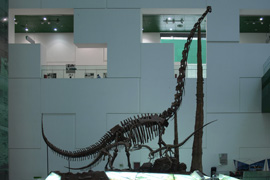 Chuanjiesaurus fossil in China Science and Technology Museum.