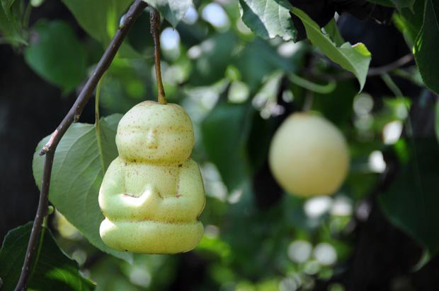 Moulded pear shaped into Buddhas